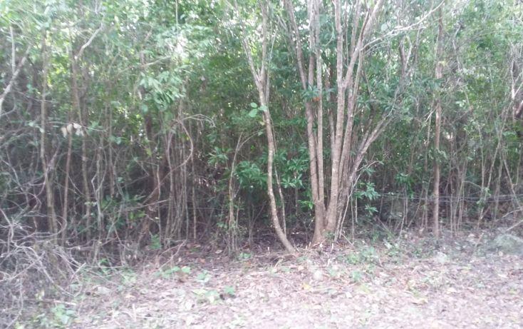 Foto de terreno habitacional en venta en, álamos i, benito juárez, quintana roo, 1636454 no 04