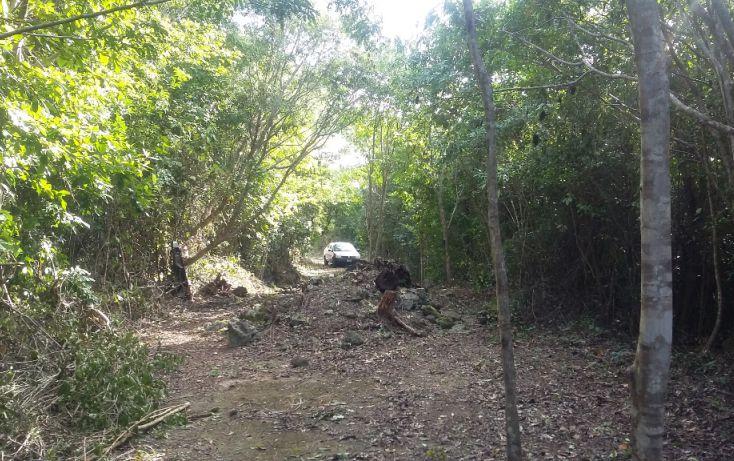 Foto de terreno habitacional en venta en, álamos i, benito juárez, quintana roo, 1636454 no 06