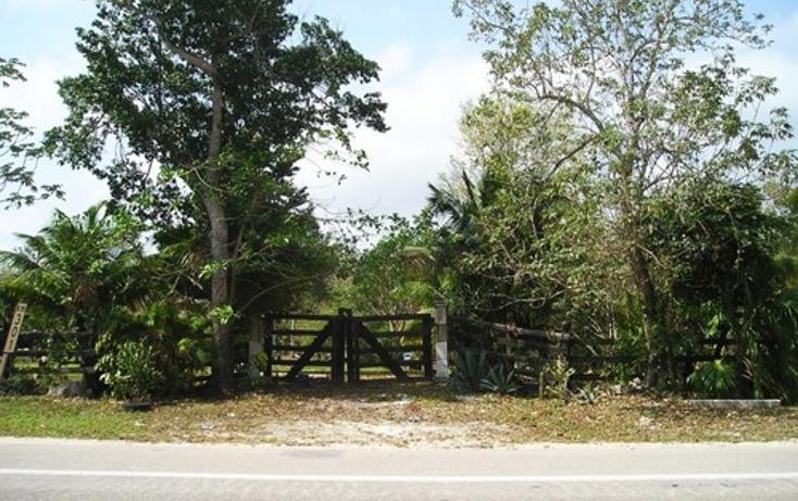 Foto de terreno comercial en venta en  , alfredo v bonfil, benito ju?rez, quintana roo, 1046649 No. 02
