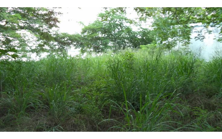 Foto de terreno comercial en renta en  , altamira centro, altamira, tamaulipas, 1419175 No. 06