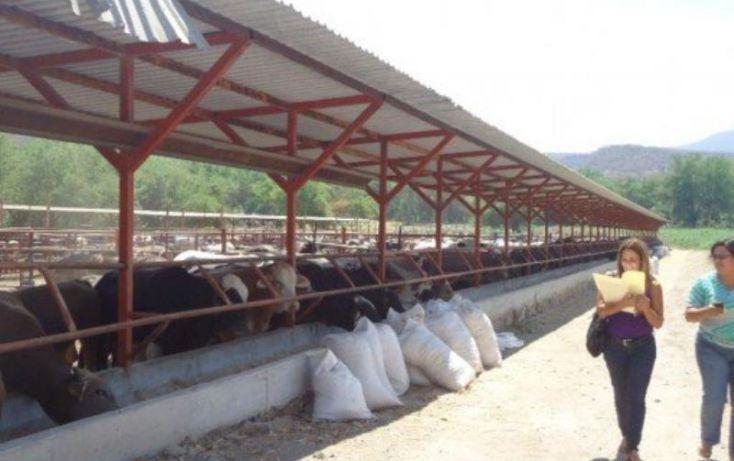 Foto de rancho en venta en amacuzac 52, tehuixtla, jojutla, morelos, 1622006 no 02