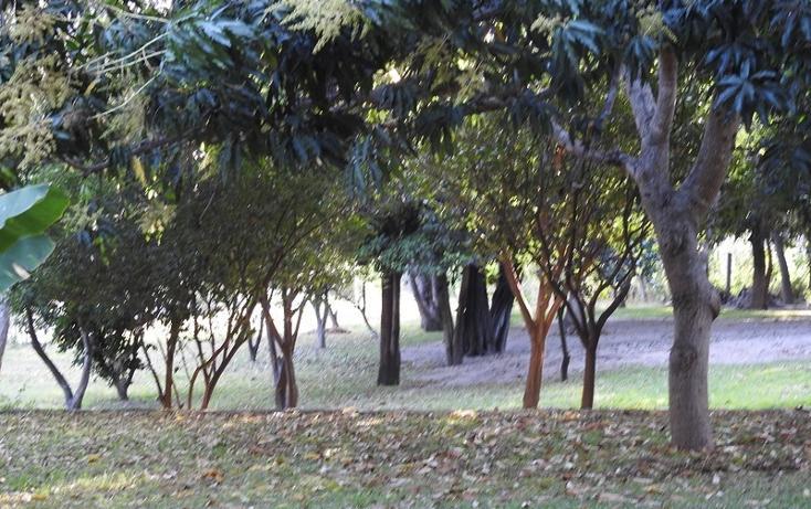 Foto de rancho en venta en  , amacuzac, amacuzac, morelos, 1700020 No. 07