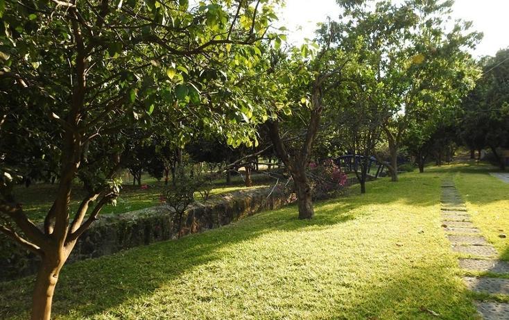 Foto de rancho en venta en  , amacuzac, amacuzac, morelos, 1700020 No. 18