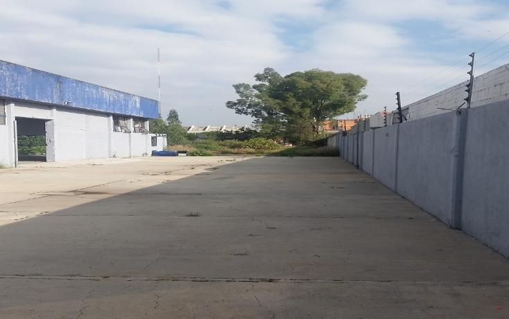 Foto de terreno habitacional en venta en  , los olivos, tláhuac, distrito federal, 3432039 No. 05