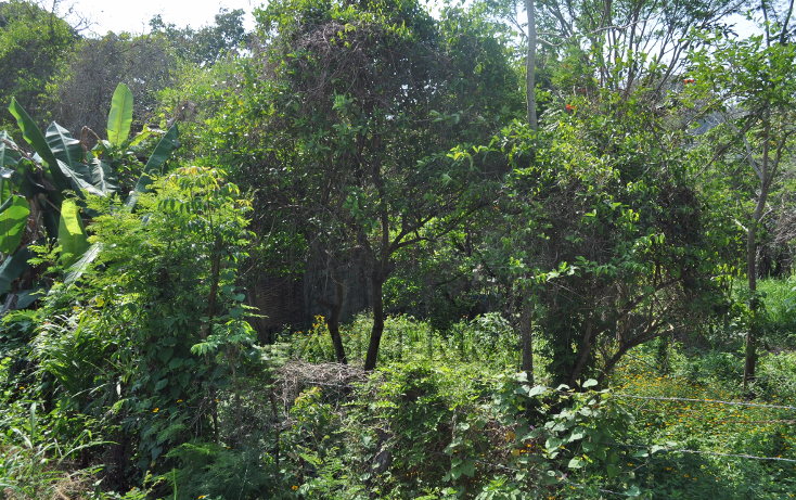 Foto de terreno habitacional en venta en  , anáhuac, tuxpan, veracruz de ignacio de la llave, 1477105 No. 06