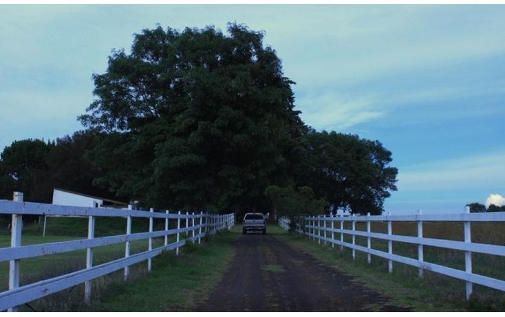 Foto de rancho en venta en  , arandas centro, arandas, jalisco, 947291 No. 17