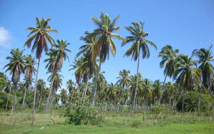 Foto de terreno habitacional en venta en av las palmas, emiliano zapata, san marcos, guerrero, 1701036 no 01