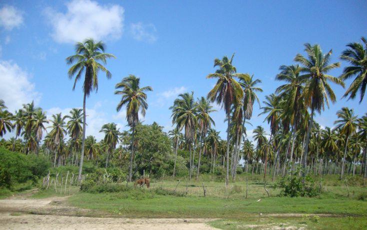 Foto de terreno habitacional en venta en av las palmas, emiliano zapata, san marcos, guerrero, 1701036 no 02