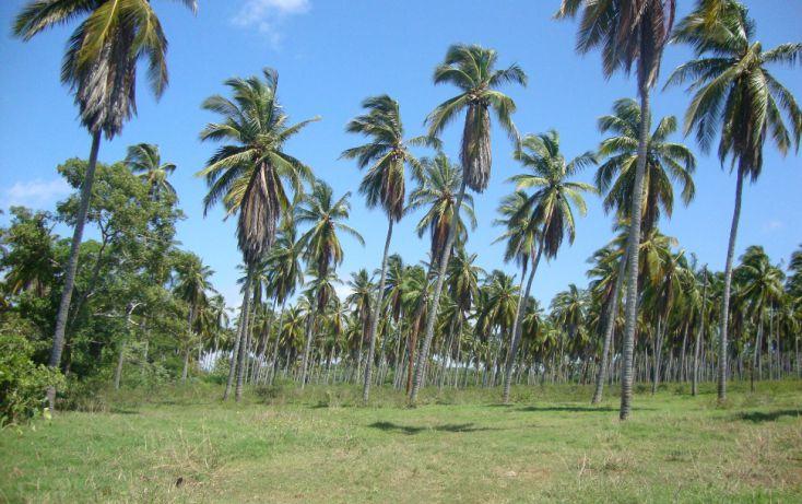 Foto de terreno habitacional en venta en av las palmas, emiliano zapata, san marcos, guerrero, 1701036 no 03