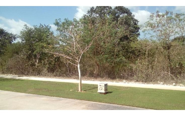 Foto de terreno habitacional en venta en avenida del jaguar 69 , yucatan, mérida, yucatán, 1719598 No. 10