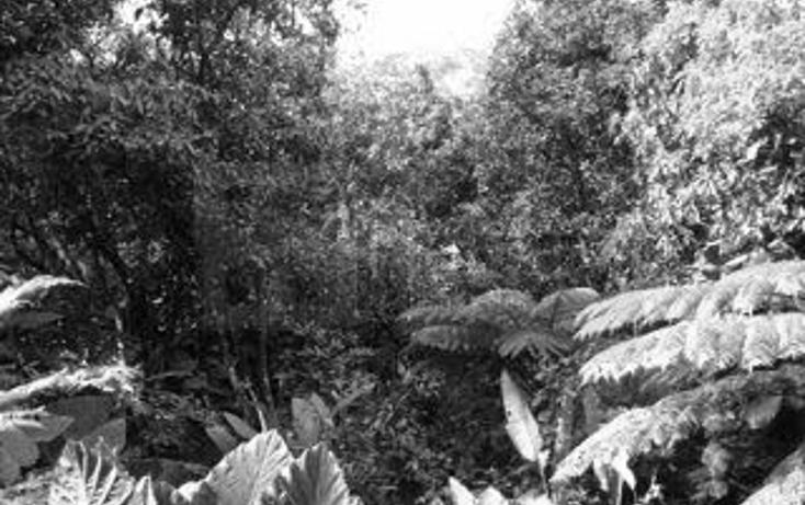 Foto de casa en venta en  , aves del paraíso, tepic, nayarit, 1252061 No. 40