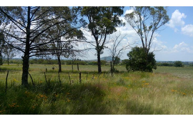 Foto de terreno habitacional en venta en  , batha y barrios, nopala de villagr?n, hidalgo, 1140725 No. 02