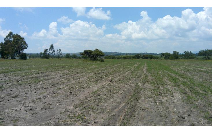 Foto de terreno habitacional en venta en  , batha y barrios, nopala de villagr?n, hidalgo, 1140725 No. 10