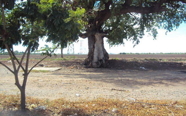 Foto de terreno habitacional en renta en blvd centenario y vial de ferrocarril sn, ricardo flores magón, ahome, sinaloa, 1709708 no 05