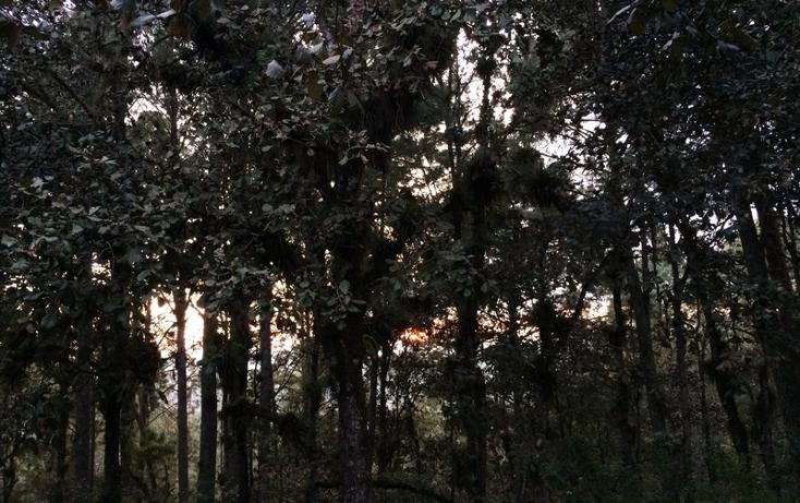 Foto de casa en renta en  , bosques de huitepec, san cristóbal de las casas, chiapas, 1489635 No. 07