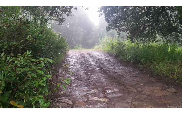 Foto de terreno habitacional en venta en  , bosques de san cayetano, mineral del monte, hidalgo, 1271361 No. 06