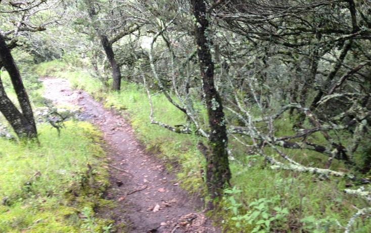 Foto de terreno habitacional en venta en  , bosques de san cayetano, mineral del monte, hidalgo, 1278205 No. 10