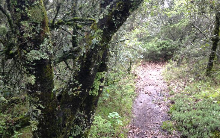 Foto de terreno habitacional en venta en  , bosques de san cayetano, mineral del monte, hidalgo, 1278205 No. 11