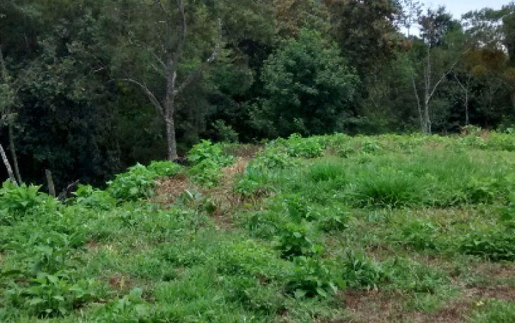 Foto de terreno habitacional en venta en, briones, coatepec, veracruz, 1411013 no 04