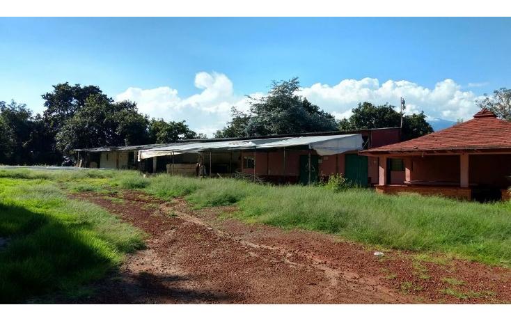 Foto de terreno habitacional en venta en  , buenavista, villa guerrero, m?xico, 1339479 No. 04