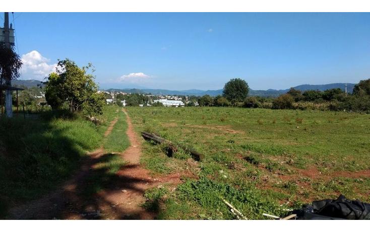 Foto de terreno habitacional en venta en  , buenavista, villa guerrero, m?xico, 1339479 No. 05