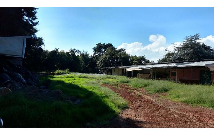 Foto de terreno habitacional en venta en  , buenavista, villa guerrero, m?xico, 1339479 No. 10