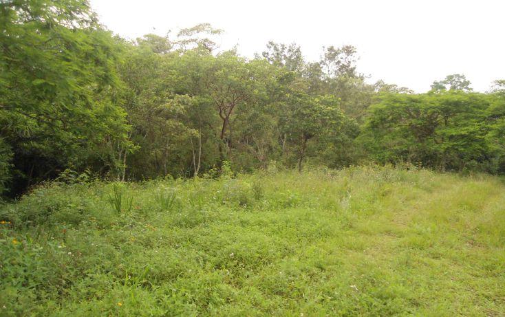 Foto de terreno habitacional en venta en, bugambilias del sumidero, xalapa, veracruz, 1290477 no 02