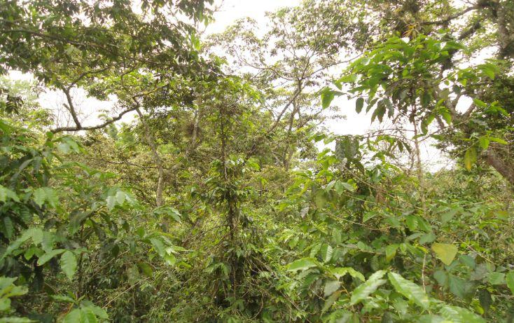 Foto de terreno habitacional en venta en, bugambilias del sumidero, xalapa, veracruz, 1290477 no 06
