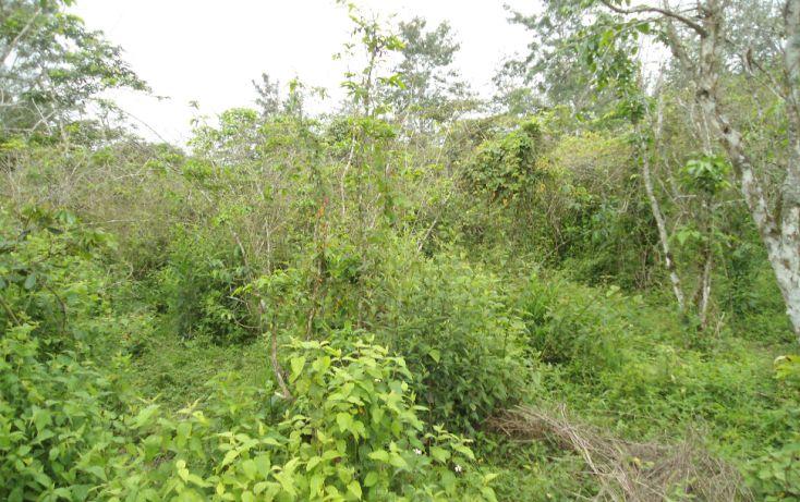 Foto de terreno habitacional en venta en, bugambilias del sumidero, xalapa, veracruz, 1290477 no 07
