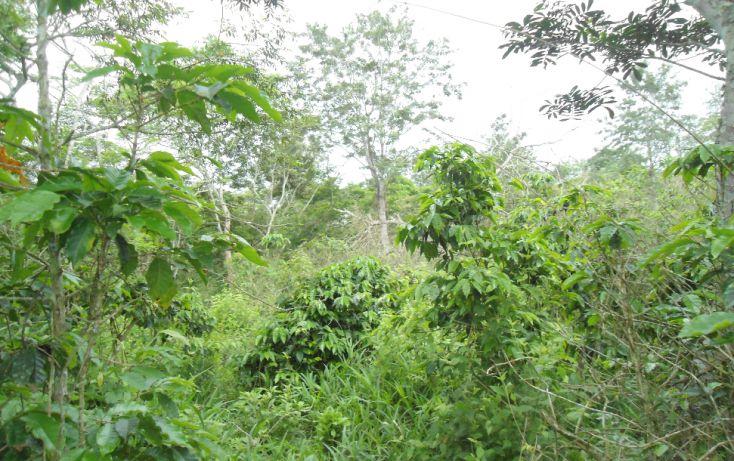 Foto de terreno habitacional en venta en, bugambilias del sumidero, xalapa, veracruz, 1290477 no 09