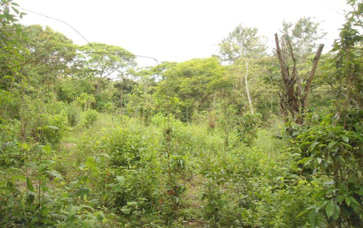Foto de terreno habitacional en venta en, bugambilias del sumidero, xalapa, veracruz, 1290477 no 11