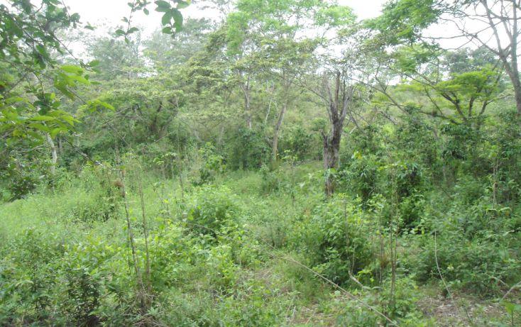 Foto de terreno habitacional en venta en, bugambilias del sumidero, xalapa, veracruz, 1290477 no 13