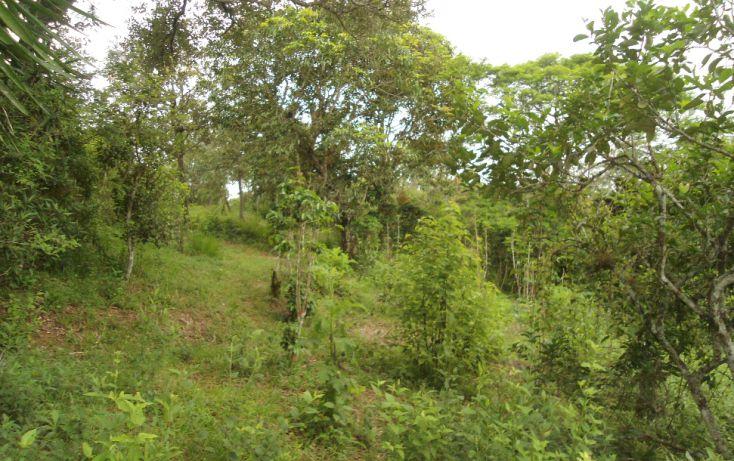 Foto de terreno habitacional en venta en, bugambilias del sumidero, xalapa, veracruz, 1290477 no 14