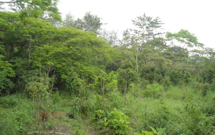 Foto de terreno habitacional en venta en, bugambilias del sumidero, xalapa, veracruz, 1290477 no 16