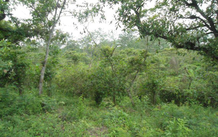 Foto de terreno habitacional en venta en, bugambilias del sumidero, xalapa, veracruz, 1290477 no 17