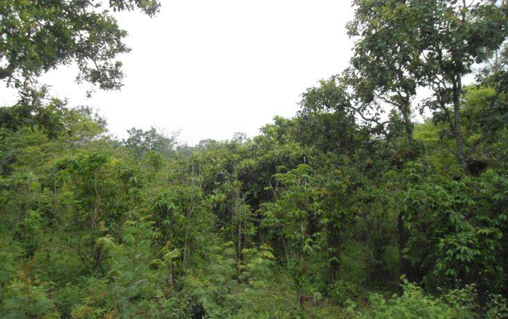 Foto de terreno habitacional en venta en, bugambilias del sumidero, xalapa, veracruz, 1290477 no 18