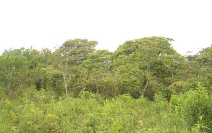 Foto de terreno habitacional en venta en, bugambilias del sumidero, xalapa, veracruz, 1290477 no 19