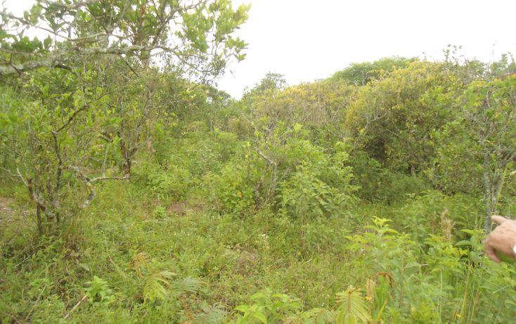 Foto de terreno habitacional en venta en, bugambilias del sumidero, xalapa, veracruz, 1290477 no 20