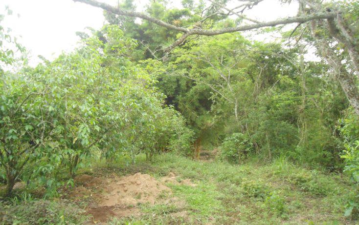 Foto de terreno habitacional en venta en, bugambilias del sumidero, xalapa, veracruz, 1290477 no 22