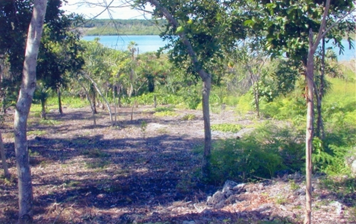 Foto de terreno comercial en venta en  , calderitas, othón p. blanco, quintana roo, 1057255 No. 05