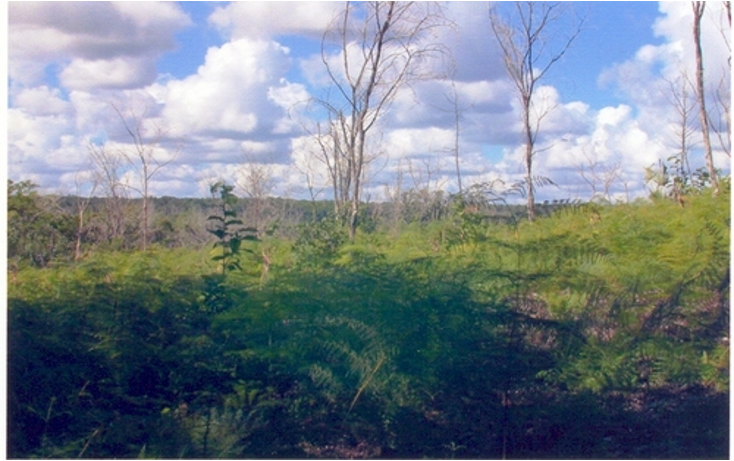 Foto de terreno comercial en venta en  , calderitas, othón p. blanco, quintana roo, 1057255 No. 07