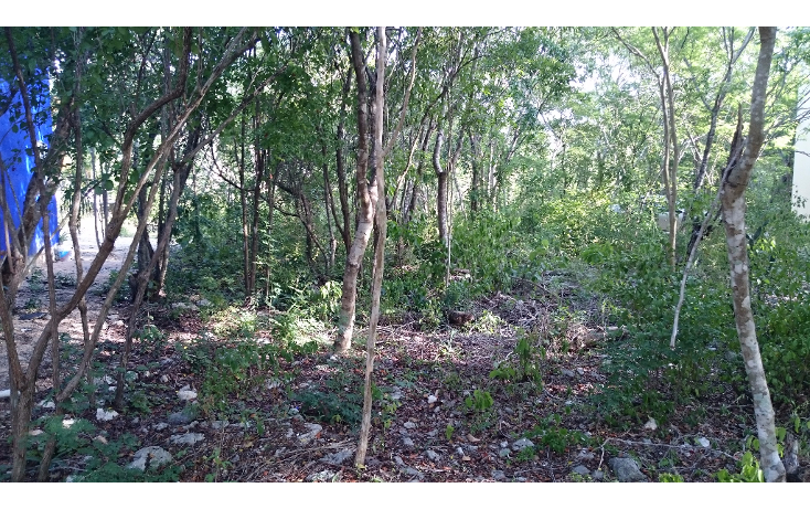 Foto de terreno habitacional en venta en  , caleta chac malal, solidaridad, quintana roo, 1141097 No. 01