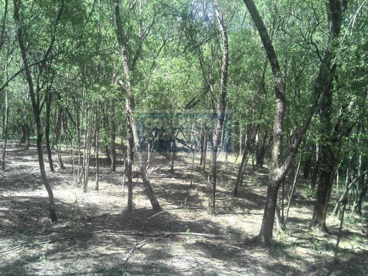 Foto de terreno habitacional en venta en  , lazarillos de abajo, allende, nuevo león, 261341 No. 07