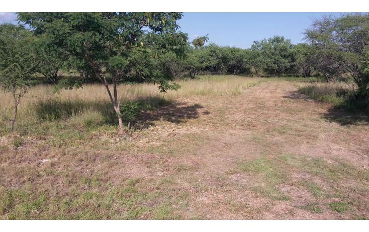 Foto de terreno habitacional en venta en  , calles, montemorelos, nuevo león, 448375 No. 20