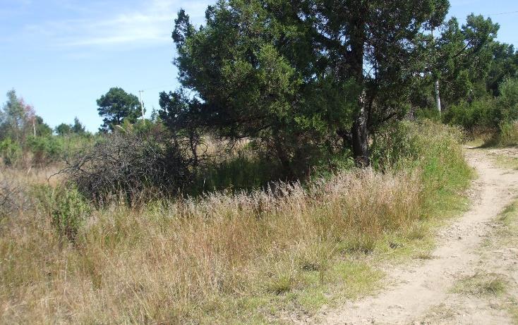 Foto de terreno habitacional en venta en  , santa cruz tlaxcala, santa cruz tlaxcala, tlaxcala, 1713960 No. 10