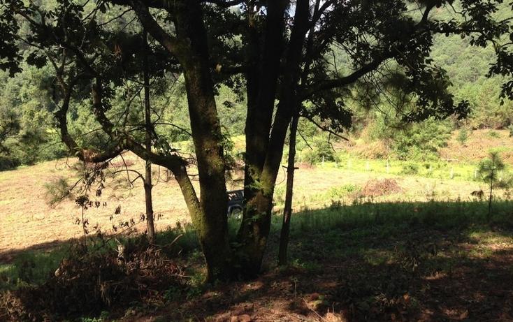Foto de terreno habitacional en venta en  , cerro gordo, valle de bravo, méxico, 829619 No. 03