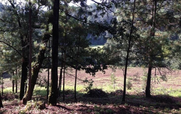 Foto de terreno habitacional en venta en  , cerro gordo, valle de bravo, méxico, 829619 No. 04
