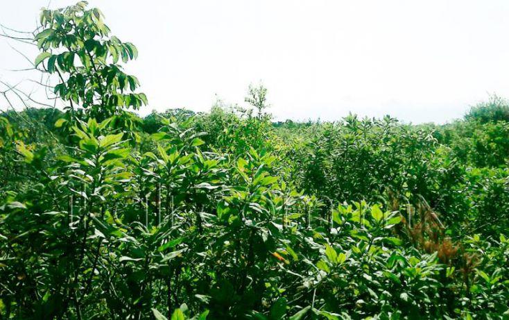 Foto de terreno habitacional en venta en camino a laguna de tampamachoco, la mata, tuxpan, veracruz, 1589312 no 03