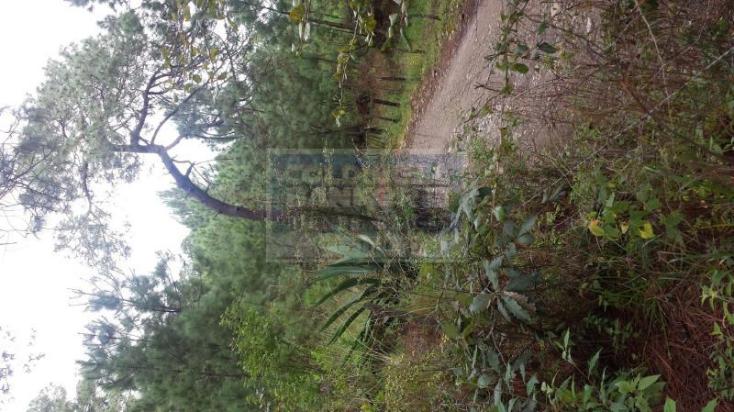 Foto de terreno habitacional en venta en  , mazamitla, mazamitla, jalisco, 1445469 No. 03