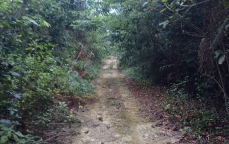 Foto de terreno habitacional en venta en camino a vallarta , leona vicario, felipe carrillo puerto, quintana roo, 1251115 No. 04